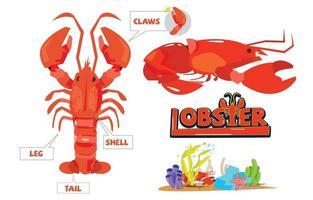 Set of red lobster illustration vector