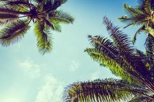 palmeras de coco