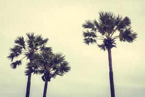 palmeras sobre fondo de cielo azul foto