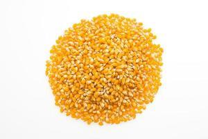 semilla de mazorca de maíz foto