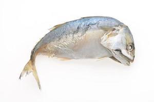 Mackerel fish isolated photo