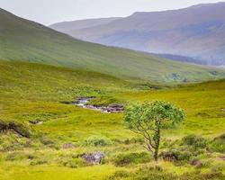 Único árbol con frutos rojos entre brezos y rocas en la isla de Skye, Escocia, Reino Unido foto