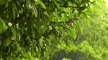 Raining on Leaves