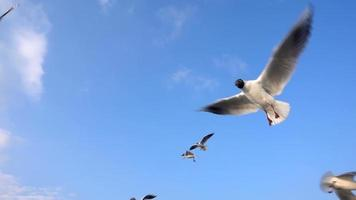 Seagulls Flying Freely in the Sky video