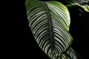 primer plano de hojas verdes foto