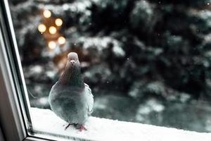 Pidgeon near a window photo