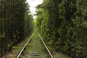 Train track through a green tunnel photo