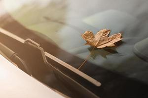 Brown leaf on windshield photo