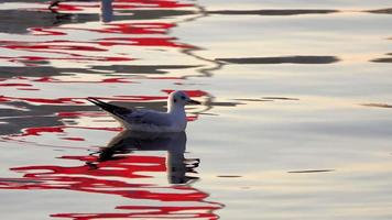 Seagulls in Calm Waters