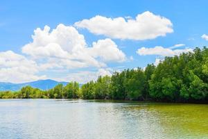 Beautiful mangrove forest landscape in Thailand photo