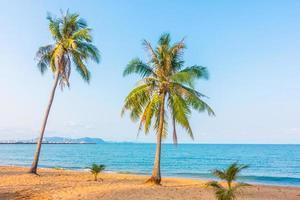 cocotero en la playa foto