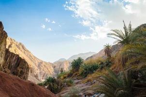 plantas del desierto y montañas foto