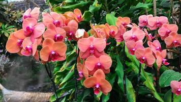 flor de la orquídea naranja en el jardín foto