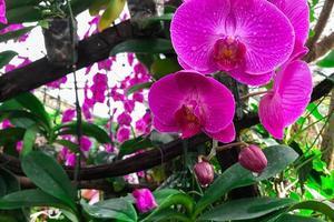 flor de orquídea en el jardín foto
