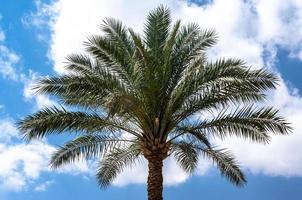 palmera y cielo azul