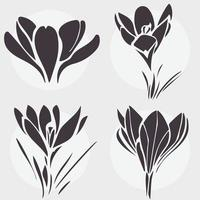 conjunto de flores blancas y negras, azafrán, flores de primavera vector