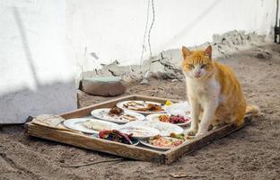 Cat next to food