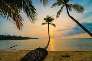 Beautiful paradise island with beach and sea around coconut palm tree