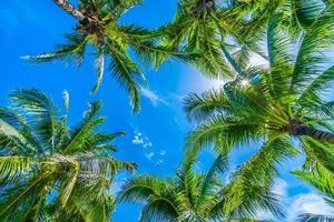 palmera de coco en el cielo azul