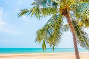 hermosa palmera en la playa