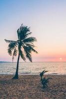 palmera en la playa