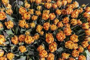 Orange flower bulbs crammed in the garden photo