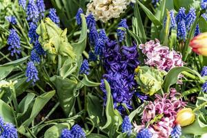 Assorted spring flowers photo