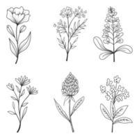 colección de hermosas hierbas y flores silvestres y hojas aisladas sobre fondo blanco.