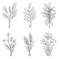 Collection of beautiful herbs and wild flowers and leaves isolated on white background. vector