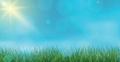 Landscape green grass on a background of blue sky bokeh - Vector