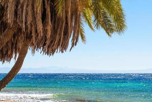 palmera y agua foto