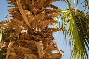 primer plano de la palmera