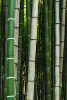 primer plano de bambú foto
