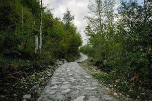 Sendero de piedra con árboles verdes.
