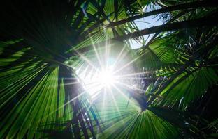 luz del sol a través de hojas de palmera foto