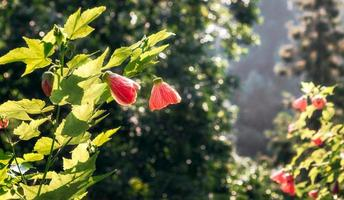 Red blooming flowers photo