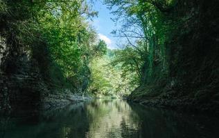 río y bosque foto
