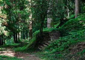 escaleras en un bosque foto