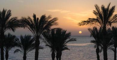siluetas de palmeras y puesta de sol foto