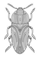 Golden Beetle linear coloring book illustration vector