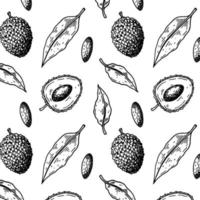 Hand drawn seamless pattern with lychee fruits and leaves. Vector illustration in botanical sketch style