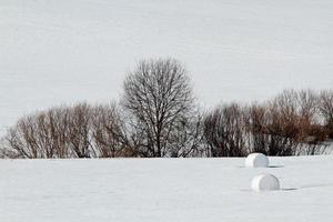 paisaje de campo cubierto de nieve foto