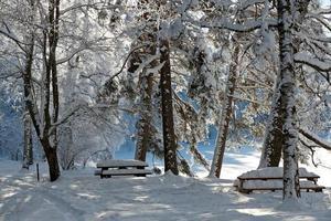 Árboles congelados y bancos en ventisquero en un día soleado foto