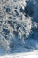 Ramas de abedul blanco congelado con escarcha cayendo en el aire foto