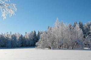 un pequeño islote con abedules blancos congelados y copos de escarcha en el aire foto