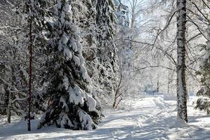 A pathway through a wintry forest landscape