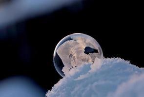 Frozen soap bubbles on snowdrift