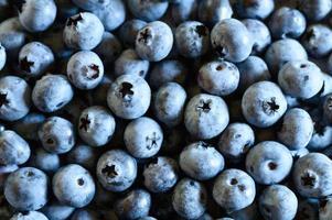 Ripe wild blueberries background photo