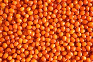 Sea buckthorn harvested and ripe photo
