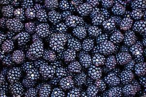 Ripe blackberry harvest photo